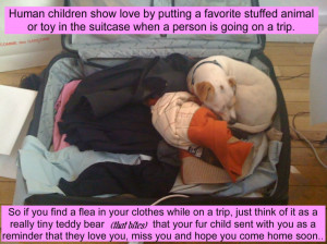 ... Show Love By Putting A Favorite Stuffed Animal - Children Quote