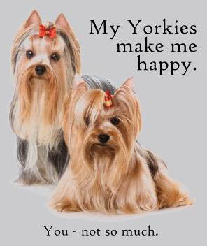 Yorkshire Terrier Apparel, Clothing