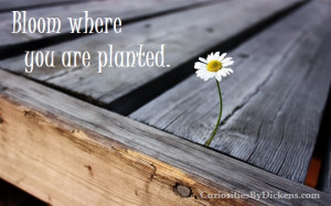 Living Fearlessly: Bloom Where You Are Planted