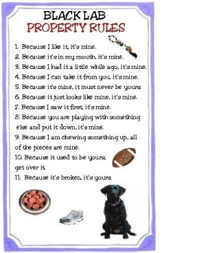 funny black lab pics | Black Lab Dog Property Rules Magnet VERY FUNNY ...