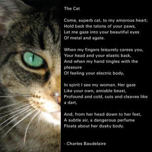 Love My Cat Poem