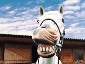 Funny Animals hd Wallpapers 2013