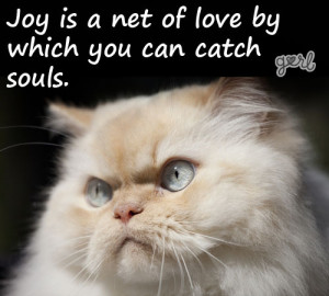 10 Angry Cats Meet Inspirational Quotes