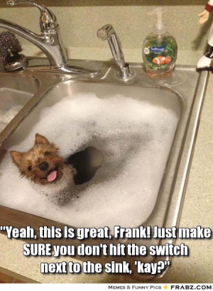 ... 30 Greatest Moments in the History of Bathtime (Funny Animal Content