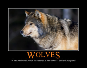 Wolves Keep the Ecosystem in Balance