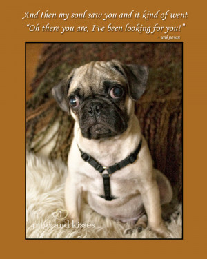 Oliver Cutest Pug Puppy by Puppy Pugs and Kisses