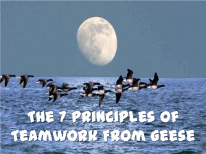 The 7 Principles Of Teamwork From Geese.