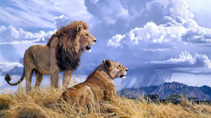Download Lion and lioness wallpaper