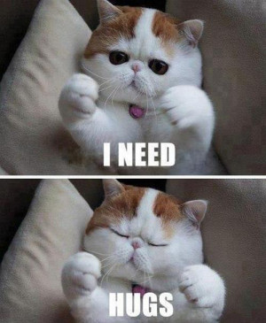 adorable, amazing, cat, cute, hug, kitty, quote, saying, text
