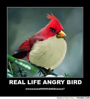 Top 20 most funny Angry birds memes and Jokes .. . #Hilarious #Funny # ...