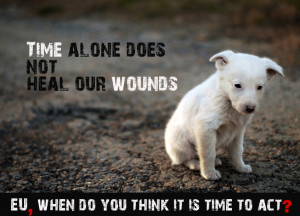 The day for compassion, care, and action for stray animals worldwide