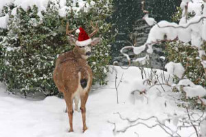 Funny Christmas Animals | In Photos