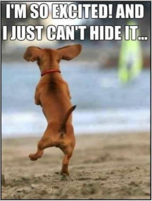 Dachshund dancing very excited Funny dog photo with captions