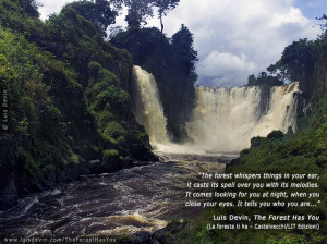photo gallery with quotes from the book the forest has you and ...