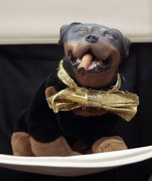 Triumph the Insult Dog has become something of an institution since ...