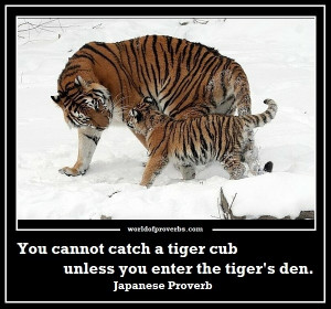 Famous Quotes: You cannot catch a tiger cub unless you enter the tiger ...