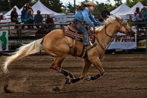 rodeo western ranch cowboy cowgirl farm show performance equine horse ...