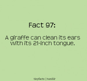 giraffe can clean its ears with its 21-inch tongue. | Fact Quote
