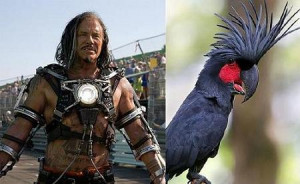 Note: That is not the actual bird featured in the film
