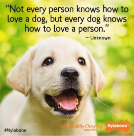 ... how to love a dog, but every dog knows how to love a person.