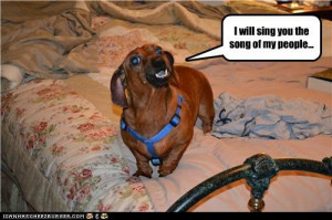 funny dachshund pictures | … dachshund – Loldogs n Cute Puppies ...