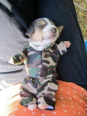 here is a very funny puppy dog wearing a funny army guy costume he ...