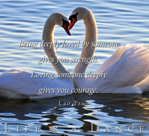 Swan love quote