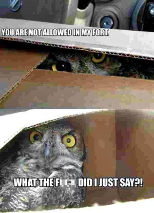 Funny Spider Man Memes