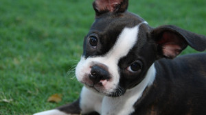 Love Your Pet Day! 11 Quotes For Animal Lovers Who Think Their Fur ...