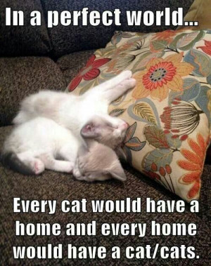 In a perfect world - cats