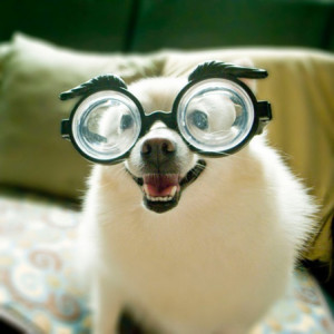 ... pink superstar frames, check out our favorite animals wearing glasses