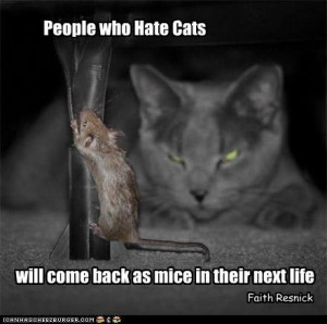 People Who Hate Cats Will Come Back As Mice In Their Next Life ...