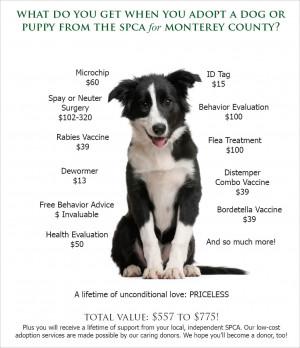 Dog Adoption Value