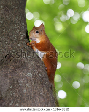 Funny cartoon of a squirrel eating a nut - stock photo