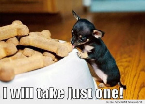 cute tiny small dog animal eating biscuit treat just one funny pics ...