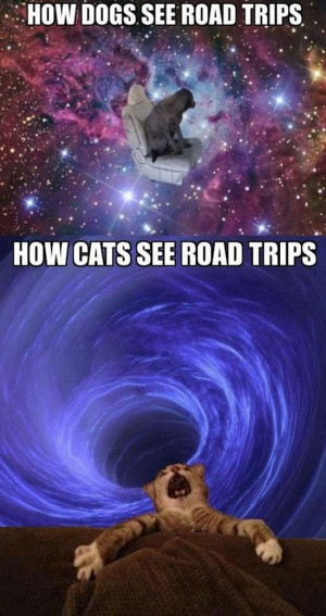 How Dogs See Road Trips Vs. How Cats See Road Trips