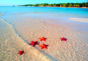 beach, sea, star, sun, sunshine, water