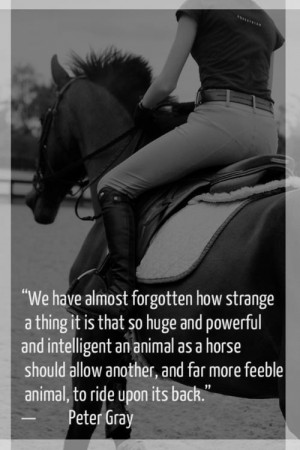horse quote | via Tumblr