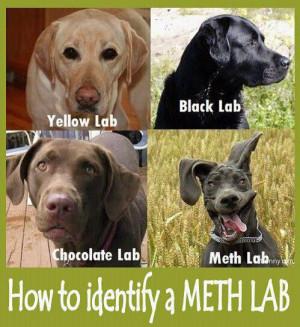 Types of Labrador Retrievers
