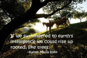 If we surrendered to earth's intelligence we could rise up rooted ...
