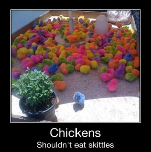 funny colorful chickens