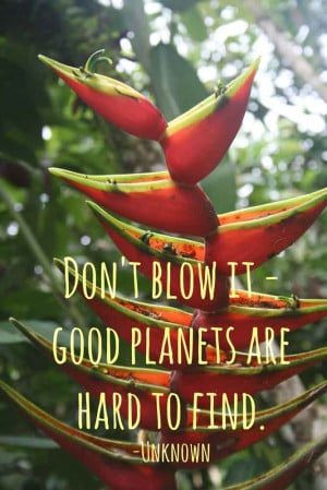 QUOTES AMAZON RAINFOREST