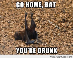 Go home bat Funny picture