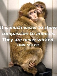 """... show compassion to animals, they are never wicked"""" -Haile Selassie"""