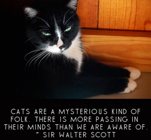 Funny & Famous Quotes about Cats (2)