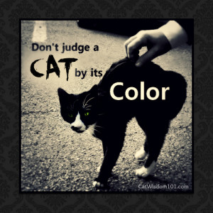 cat lovers turn their attention to the misunderstood black cats ...