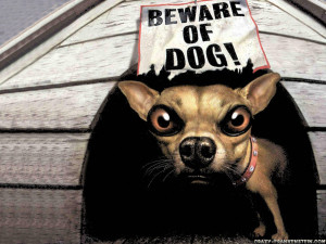 Funny Dog Wallpapers 7793 Hd Wallpapers