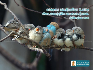 Download HD Christmas Bible Verse Greetings Card & Wallpapers Free ...