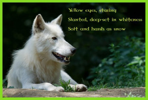 High resolution Arctic wolf poem desktop/laptop wallpaper. Listed in ...