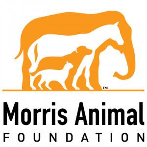 Compassion For Animals Foundation Grants